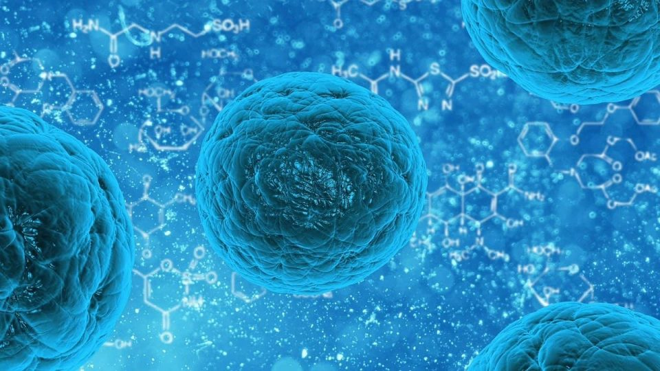 What is the role of T-cells in the fight against COVID-19?